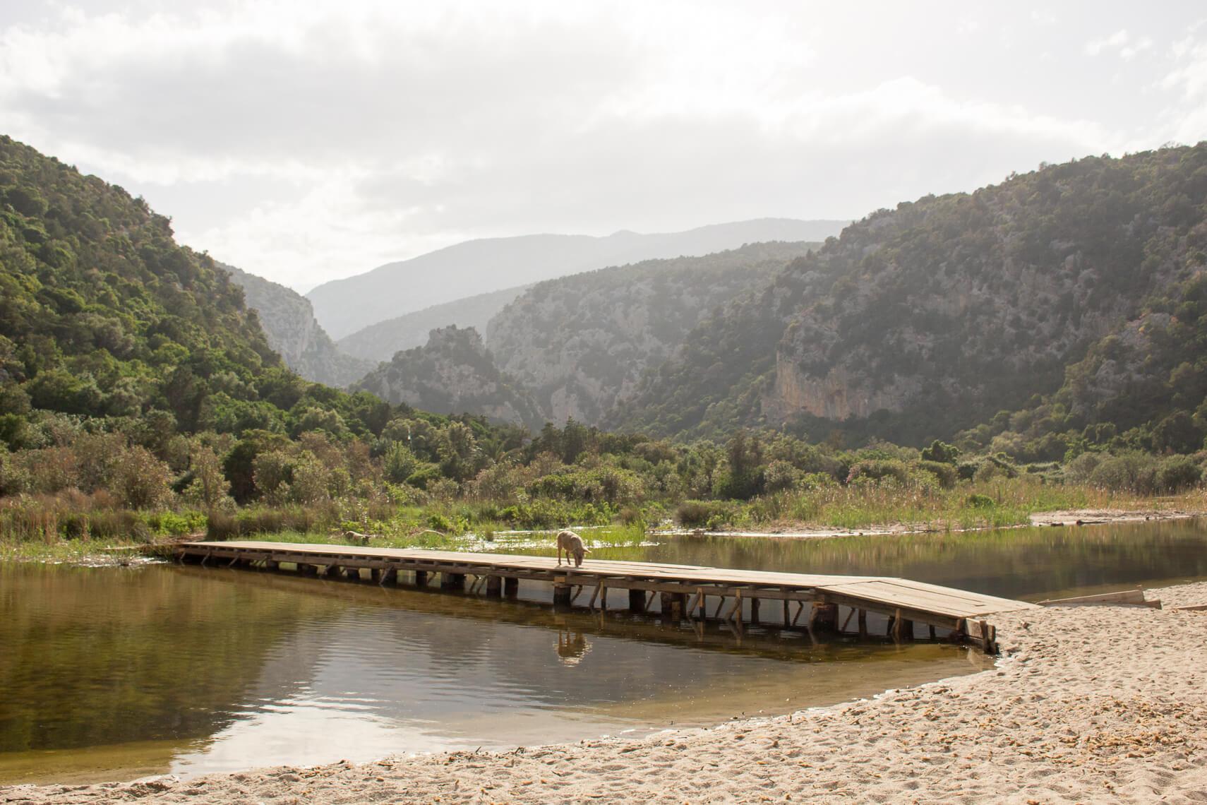Sardaigne : des randonnées entre mer, montagnes et cochons sauvages