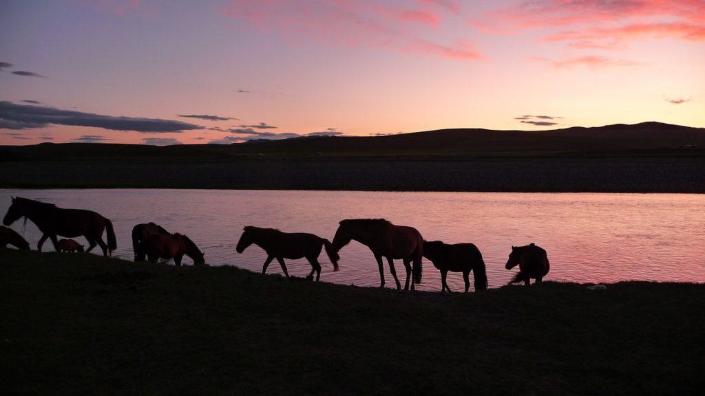 Stage de yoga bien-être trek cheval Mongolie